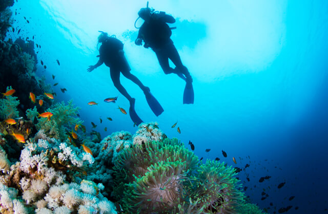 Finding Nemo -The World's Top Diving Spots