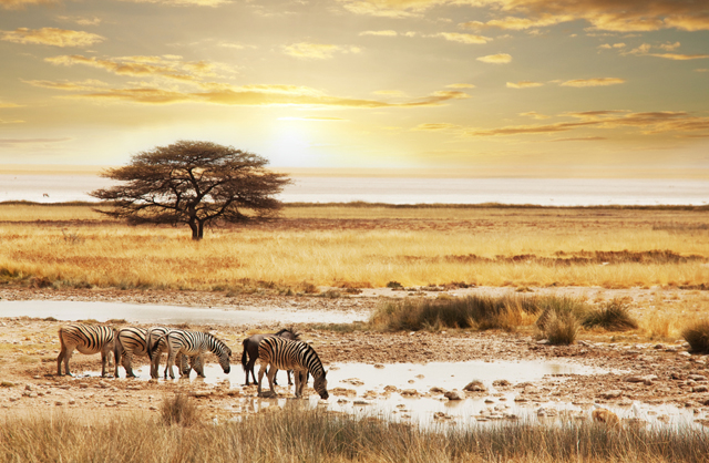 When and Where to Book the Ultimate Safari Experience